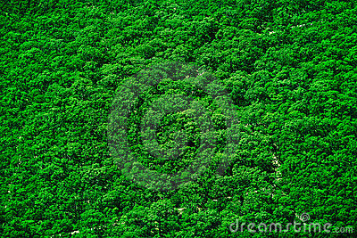 Tree Top Texture Royalty Free Stock Photography Image
