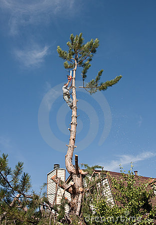 Free Tree Topping And Removal Stock Photography - 14885442