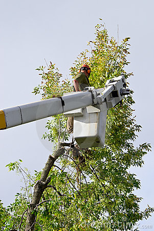 Free Tree Trimmer Stock Photo - 6859410