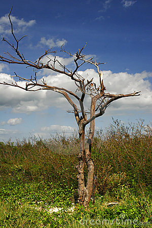Tree on the tropical beach