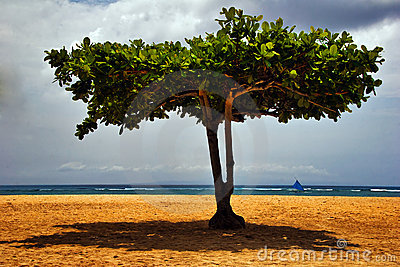 Tree on the tropical beach