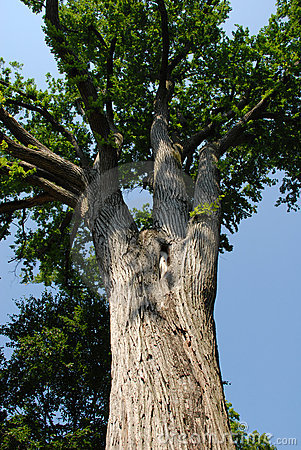 Free Tree Trunk Royalty Free Stock Photography - 2627127