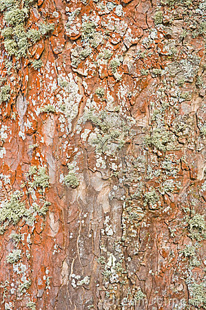 Tree trunk background