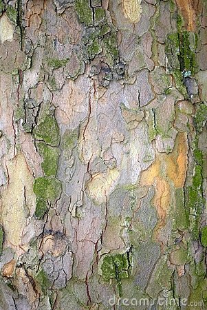 Tree trunk bark