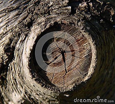 Free Tree Trunk Close-up Stock Image - 1068601