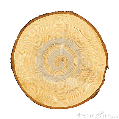 Free Tree Trunk Cross Section. CLIPPING PATH Royalty Free Stock Images - 35850239