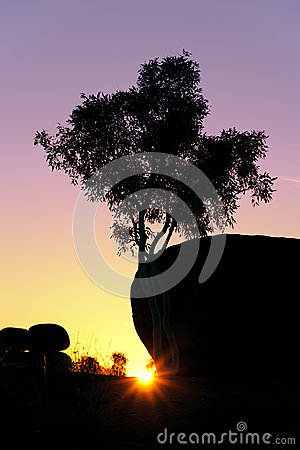 Tree trunk sunset