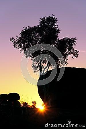 Tree trunk sunset
