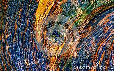 Tree trunk wood textures
