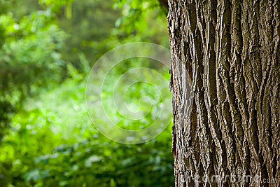 Tree trunk in the woods