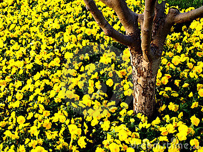 Tree Trunk with yellow flowers