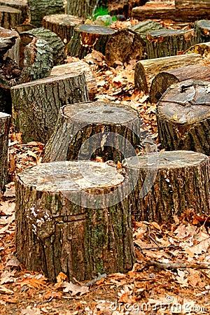 Free Tree Trunks Stock Image - 743501