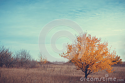 Tree under blue sky with clouds
