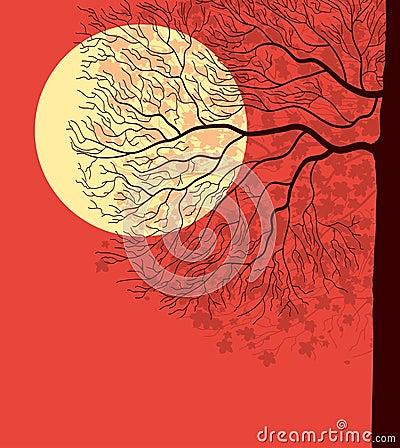 Tree under evening  sky