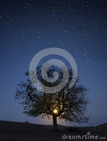 Tree under sky with stars and moon