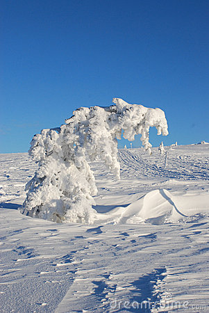 Free Tree Under Snow Royalty Free Stock Photography - 4094097