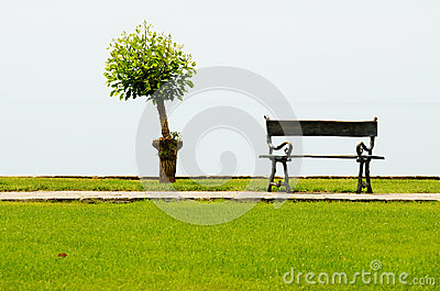 Tree and a vacant bench