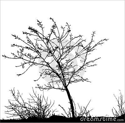 Tree / vector silhouette