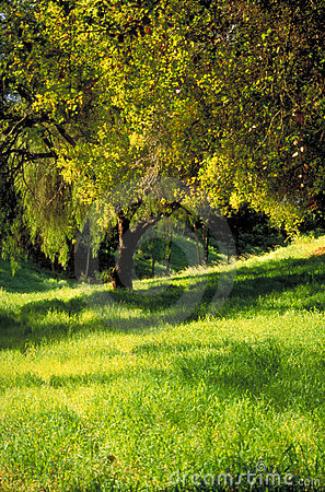 Tree in Verdant Grass