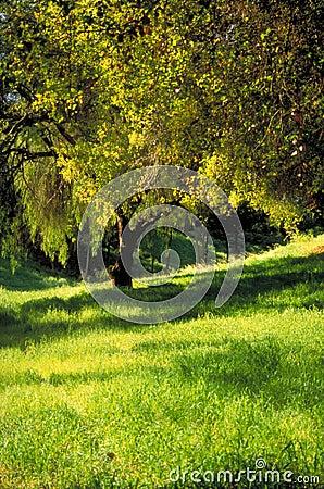 Tree in Verdant Grass