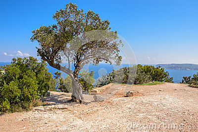Tree and views of Javea town from San Antonio Cape