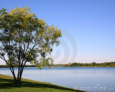 Tree at Water s Edge