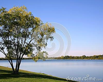 Tree at Water s Edge