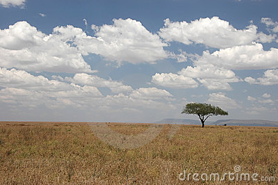 Tree in the Wilderness