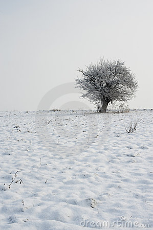 Tree on winter horizon