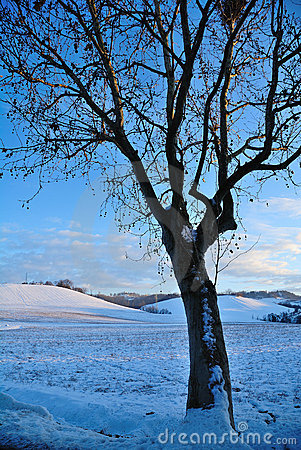 Tree in winters landscape