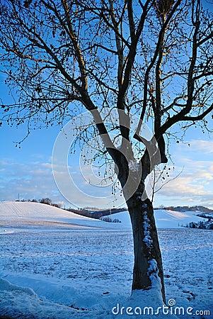 Tree in winters landscape