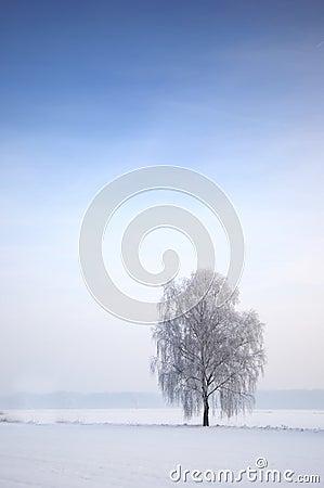 Tree in Wintry landscape