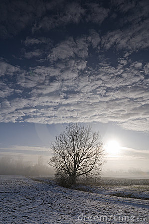 Tree in wintry landscape