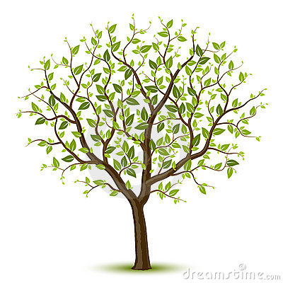 Free Tree With Green Leafage Royalty Free Stock Images - 18222179