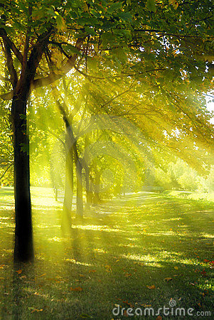 Free Tree With Rays Of Light Stock Photo - 8185860