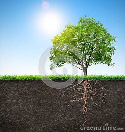 Free Tree With Roots Royalty Free Stock Photography - 38820107