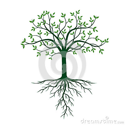 Free Tree With Roots And Green Leafs. Stock Photo - 88335770