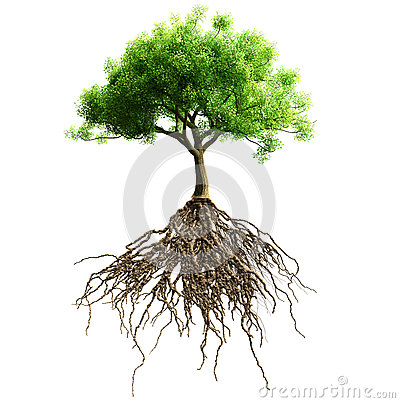 Free Tree With Roots Isolated. Stock Image - 50028551