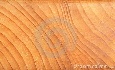 Tree year rings