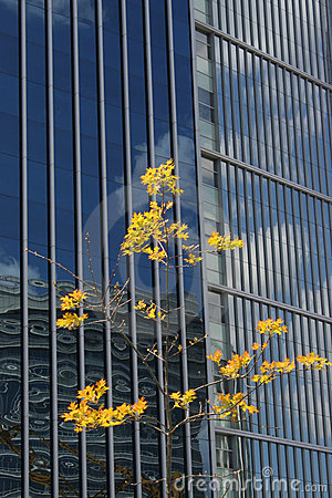 Tree With Yellow Leafs In Front Of A Big Building