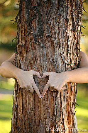 Free Treehugger Royalty Free Stock Photography - 2731417