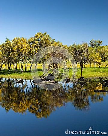 Treeline reflectin on lake