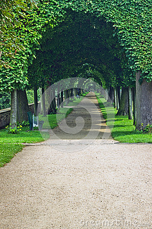 Free Trees Royalty Free Stock Photo - 44004285