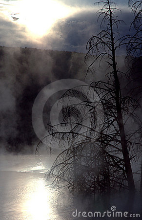 Trees Against Mist and Sunrise