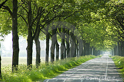 Trees along road
