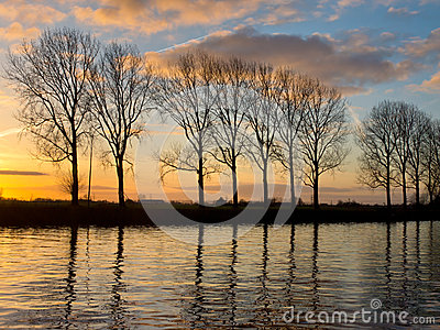 Trees along a wide waterway