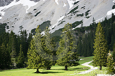 Trees in Alpine Valley