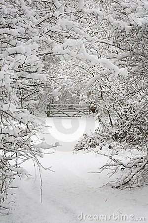 Free Trees And Gate In Snow Stock Photography - 3482452