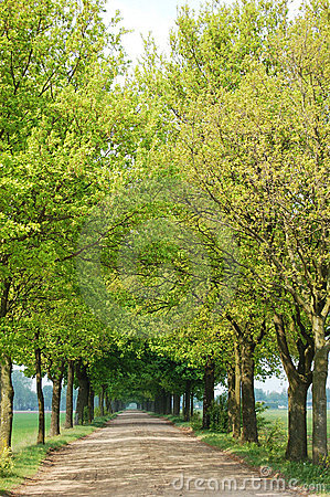 Free Trees And Path Royalty Free Stock Photos - 9216678