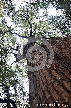 Free Trees And Sky Stock Photo - 13257170